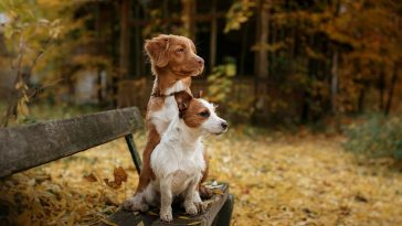 Brown and white dogs
